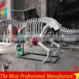 High Quantity Animal Skeletons Fossil In Big Discount