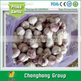 7.5kg/mesh bag garlic exporters china 2016                                                                         Quality Choice