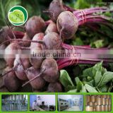 Organic Beet Root Powder/Beet Powder/beet roots extract powder