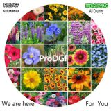 Prodgf Pacific Northwest Wildflower Seed Mix dgf-pro-1419