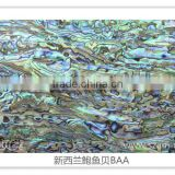 High quality natural abalone mother of pearl shell paper shell sheet shell laminate