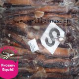 120-150G Frozen Illex Squid for Tuna Bait