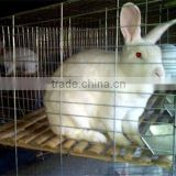 new design low price breeding rabbit cage animal cage TUV Rheinland certificated (factory)3 or 4 layer