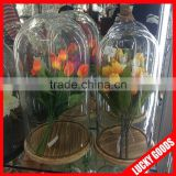 wholesale customized display flower glass dome