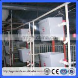 Guangzhou A type galvanized wire quail cage and water system chicken cage Broiler Chicken cage(Guangzhou Factory)