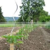 1.5m 1.8m plant binding tie / plastic twist ties for vineyards