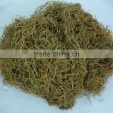 GRACILARIA SEAWEED IN NEW CROP 2014 WITH BEST PRICE