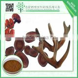 Factory Supply top quality Deer Antler Velvet pure powder-Deer Antler Stright pure powder