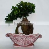 ficus ginseng microcarpa bonsai tree Taiwan Ficus Banyan Fig indoor ornamental plants nursery