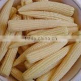 Best selling Vietnam high quality IQF Frozen Baby Corn
