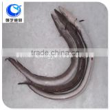 wholesale products frozen eel fish