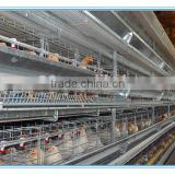 egg laying chickens for sale