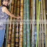 Raw pole bamboo for construction and building materials