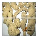 DRIED GINGER WHOLE