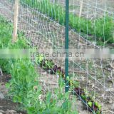 Gardien the Protector Trellis Netting is an extruded polypropylene netting manufactured to support climbing plants and vines.