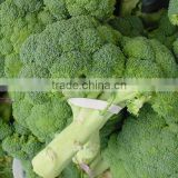 Fresh Broccoli - High Quality and Best Price