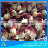 Frozen Hokkigai Clam arctic Surf Clam