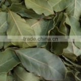 Bay Leaves ( best Bright Natural Green Color ) - dry bay leaf , bay leaf export company ,