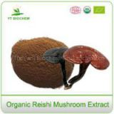 Best Organic Red Reishi Mushroom Extract Powder