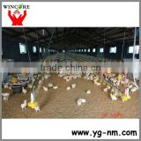 Automatic poultry feeding system for broiler chicken