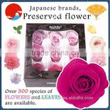 Beautiful and Colorful preserved flower materials for flower arrangement , small lot order available