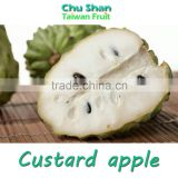 Taiwan Fresh Custard apple