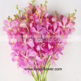 Ornamental Plants Fresh Cut Orchid Flower Type Promotional