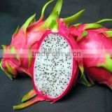 VIETNAM FRESH RED DRAGON FRUIT/ +84963818434 whatsapp