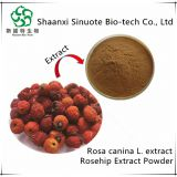 100% Water Soluble Rose Hip Fruit Extract Powder