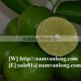Supply Fresh Seedless Lime With High Quality And Competitive Price