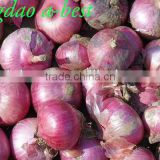 Chinese Fres Onion