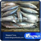 Export whole round seafood fish wholesale frozen skipjack sea food tuna price kingsun foods