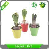 5 inch Biodegradable round clourful Nursery Pots bamboo fibre plants pot flower with tray coaster