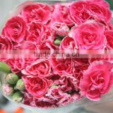 Good smell hot sale fresh cut carnations and roses