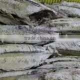 frozen seafood bonito tuna of fresh loin