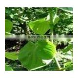 Kava Extract Powder