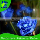 Top quality blue rose flower seeds for sowing