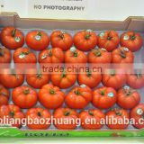 China Manufacturer 29x49cm Eco Friendly Fresh Apple Fruit Packaging