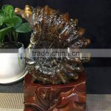 Natural snail fossil ammonite fossils for sale fossil gemstones for decoration
