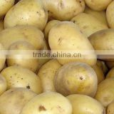 Vanilla Potato from Bangladesh