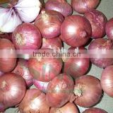 2015 new crop red onion 10kg bag