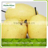 new crop fresh pear