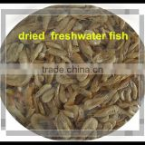 Freeze Fish Feed Dried Freshwater Shrimps