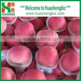 Fresh fuji apple selling in China (Varieties: fuji, huaniu, gala, golden,qinguan, red star)