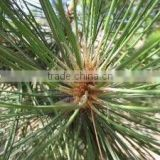 Cedarwood oil manufacturer.