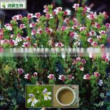 100% Natural 4:1 euphrasia officinalis extract in stock