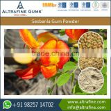 High Viscosity Excellent Surface Tension Sesbania Gum Powder for Sale