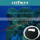 seaweed fertilizer liquid
