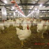 engineer available chicken control farming shed material for poultry feeding and shed