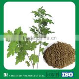 New Gastrointestinal health food Natural herb exact Argyi Leaf Extract artemisiae